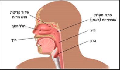 nose1